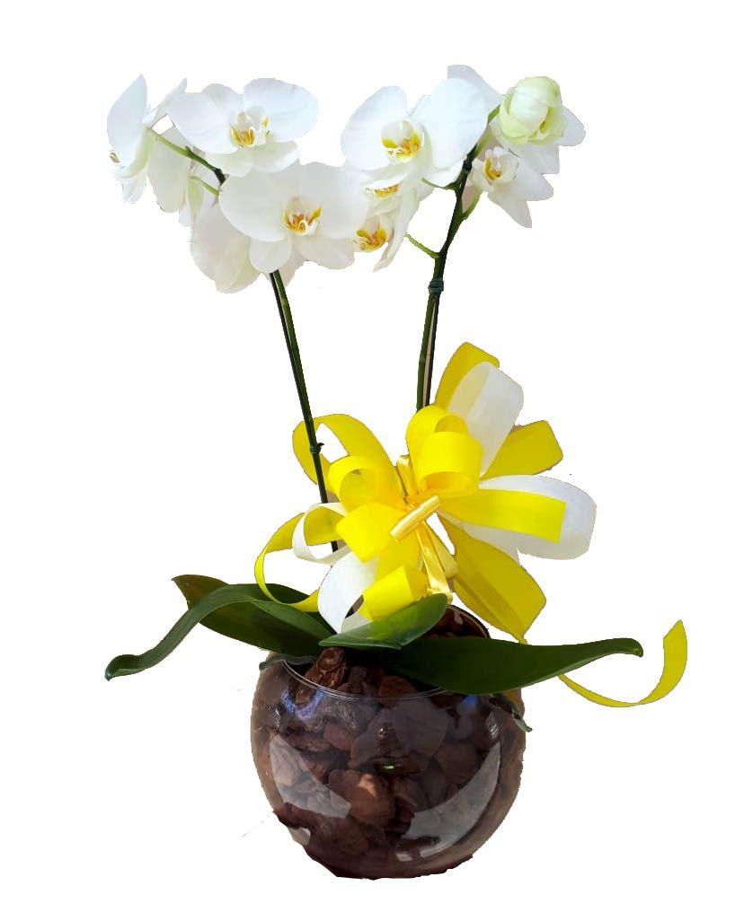 1064 Orquídea com duas Hastes