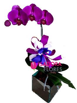 1069 Orquídea roxa