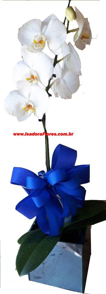 1212 Orquídea Branca