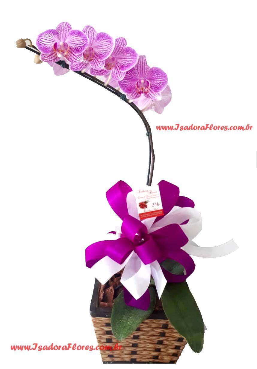 2044 Orquídea Lembrei de você