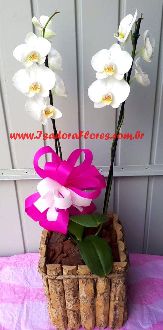 2046 Orquídea 2 Hastes