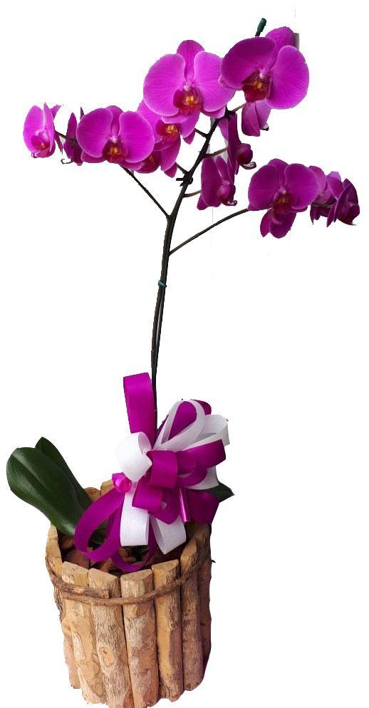 2188 Orquídea Perfilhada Roxa