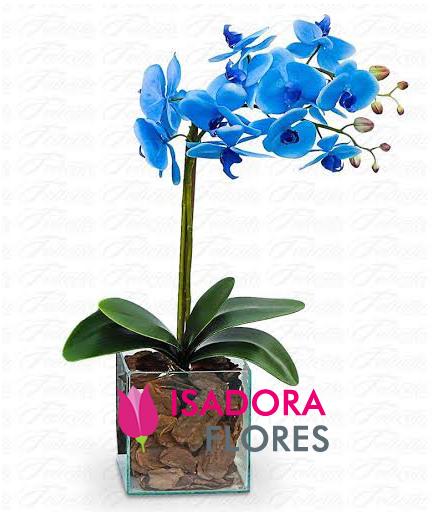 2312 Orquídea Azul