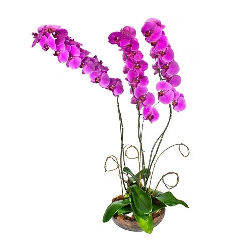 2316 Jardim de Orquídeas Roxas