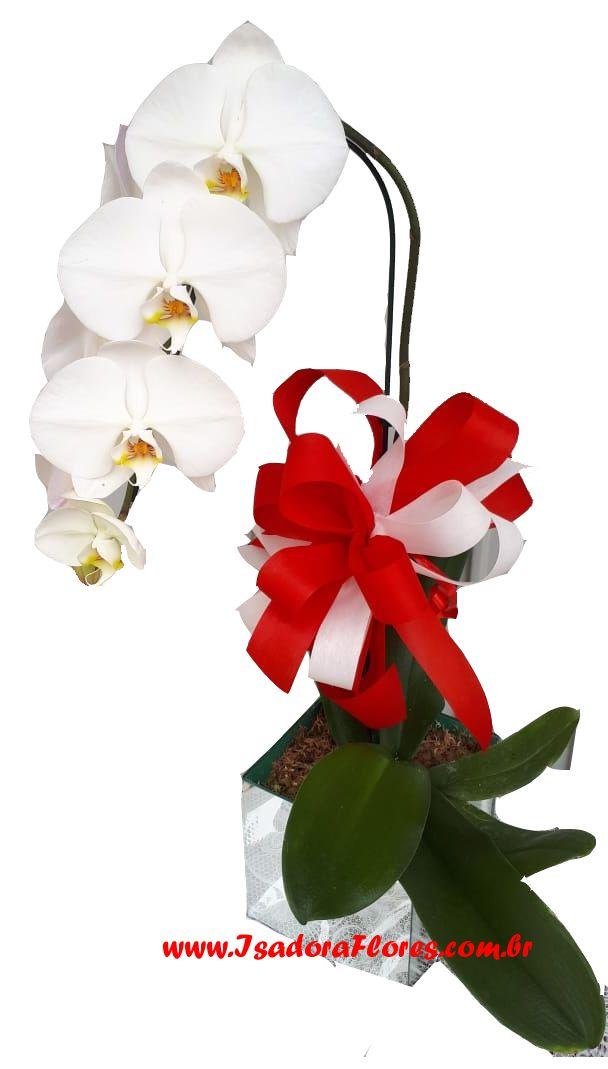 2319 Orquídea aconchego