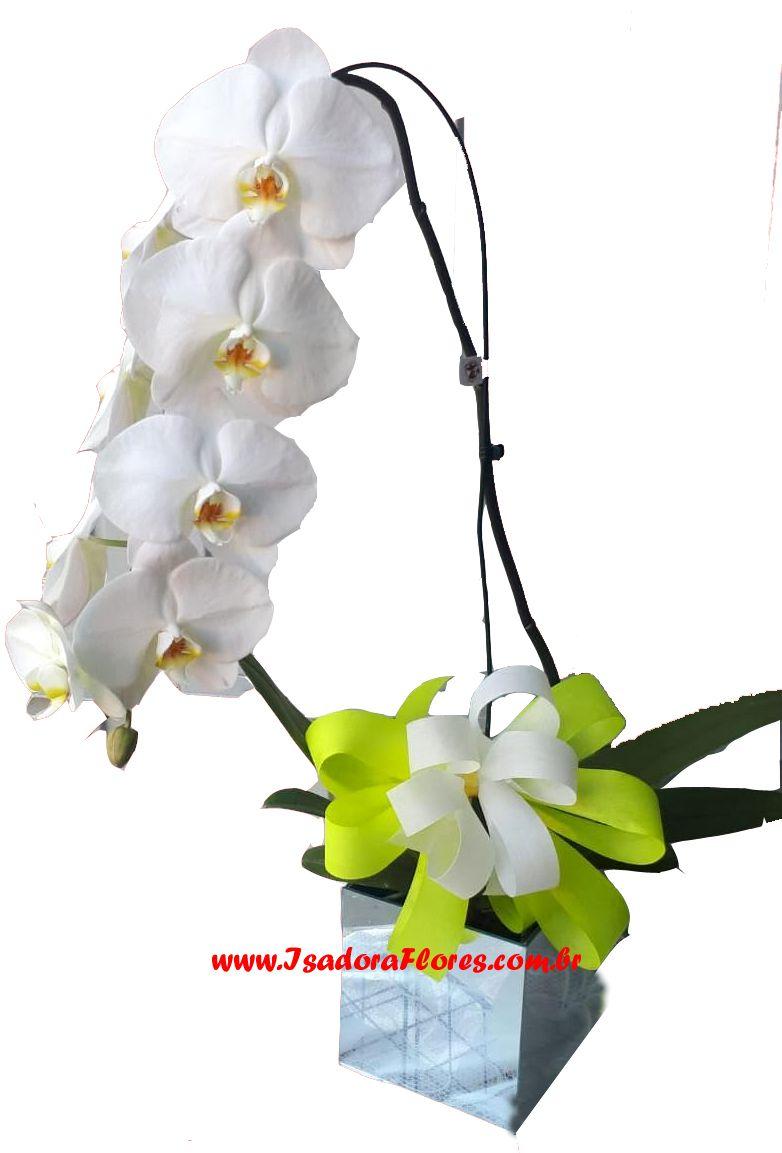 2335 Orquídea Cascata Phalaenopsis
