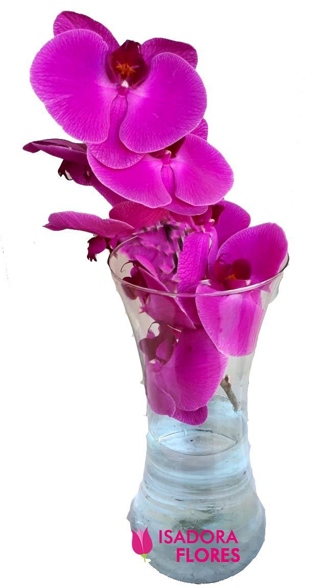 2503 Orquídea roxa em vaso