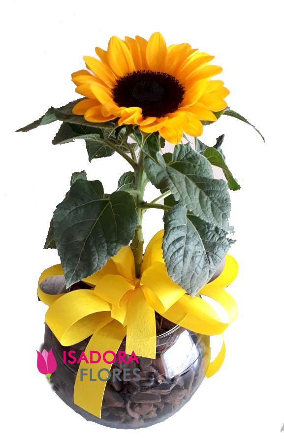 2675 Vaso Plantado de Girassól