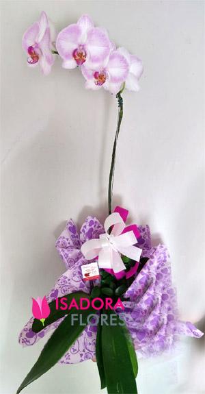 3019 Orquídea cor de rosa