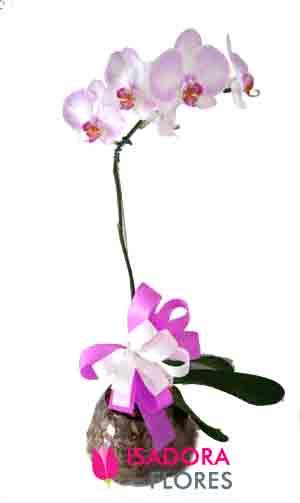 3078 Orquídea em Aquário