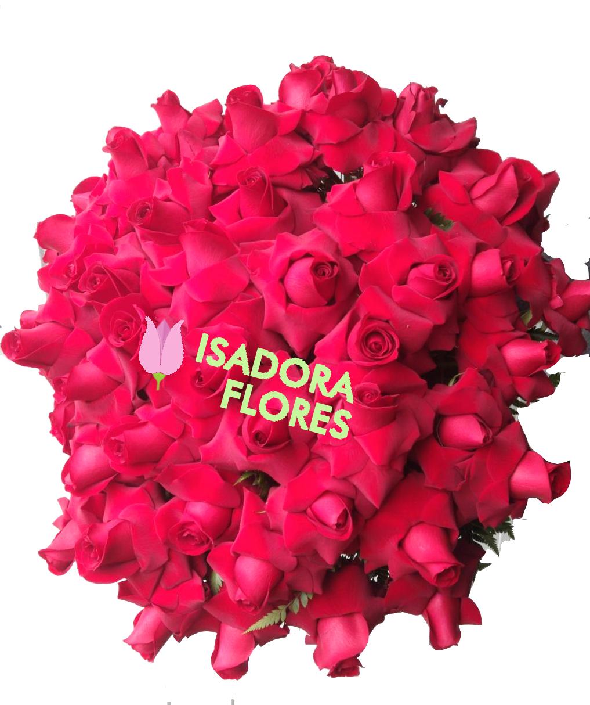 3139 Louco por você com Rosas Colombianas
