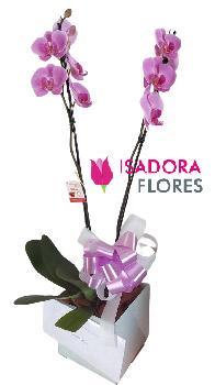 3353 Orquídea Mystic