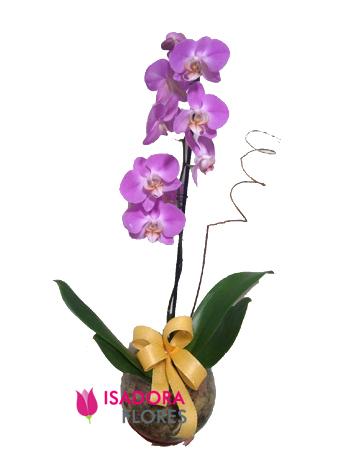 3448 Orquídea