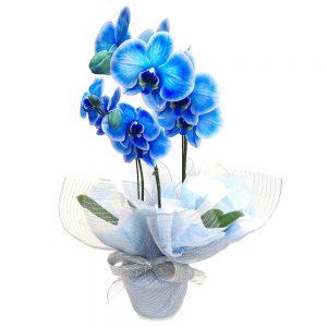 3936 Orquídea Azul