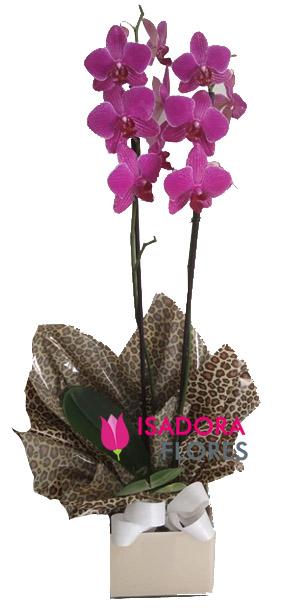 4059 Orquídea Lumina