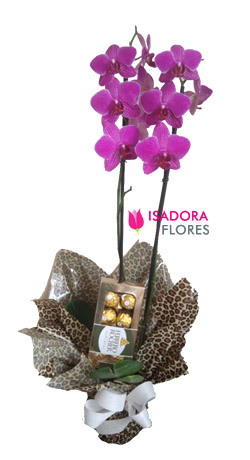4073 Orquídea + Chocolate