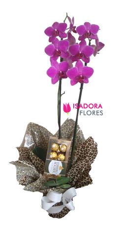4073 Orquídea + Chocolate