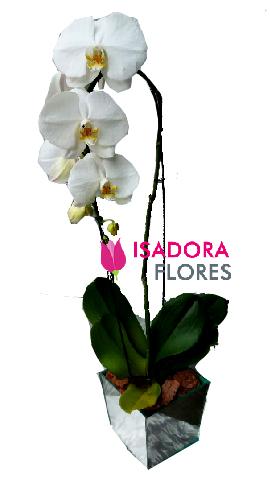 4540 Orquídea Cascata